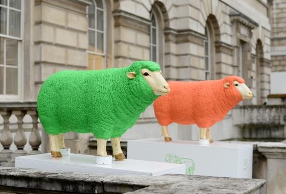 wool17